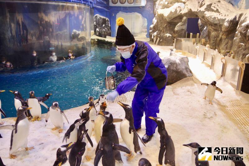 ▲屏東國立海洋生物博物館推出「我與企鵝的