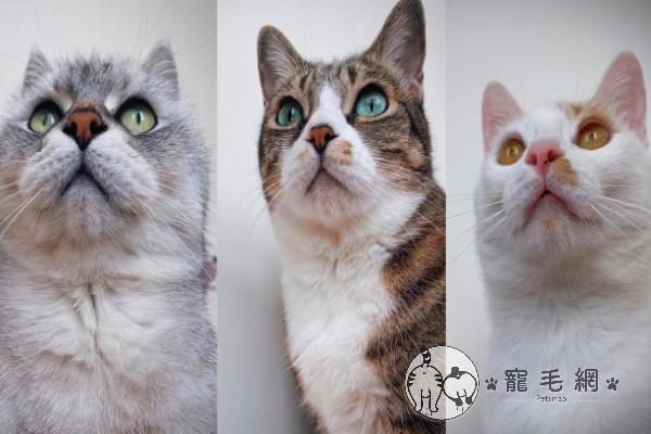 ▲網友Mandy養了三隻貓咪,由左而右依序是「虎哥」、「肥咪」與「壯壯」,她經常在粉專分享牠們有趣的生活日常(圖/粉專蔓蒂的三隻小豬授權提供)
