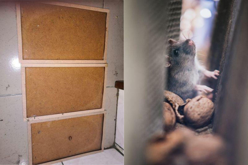 買30片黏鼠板都抓不到!內行曝「獨特秘訣」:最有吸引力