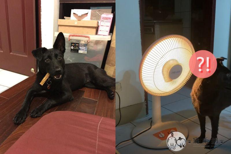 黑狗洗完澡曬一曬竟開始緩緩冒煙!(圖/Facebook@Ben Wu)