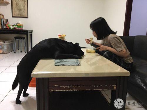 ▲小七:如果要成仙,我想要變成有好多好多食物吃的神仙!(圖/Facebook@Ben