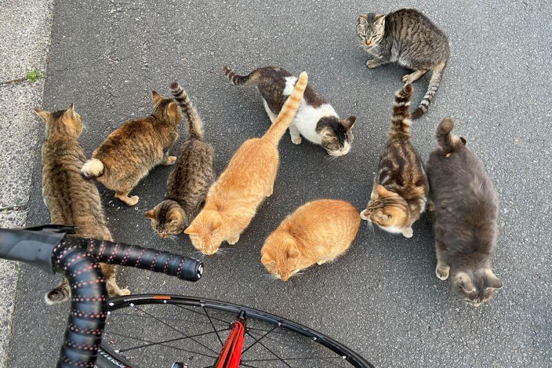 半路被一群「惡霸肥貓」攔截 貓皇:交出罐罐才能過!