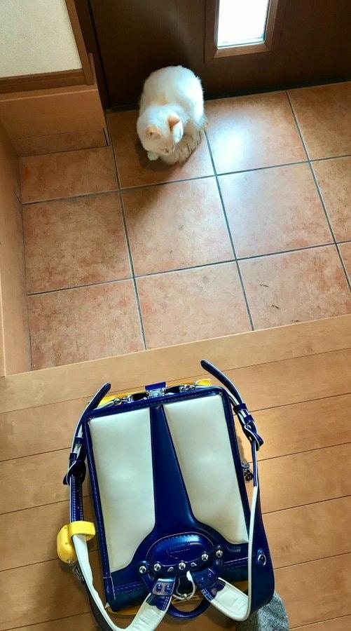 ▲小主人回家把書包放在玄關就跑出門(圖/Twitter@omochi_nam01)