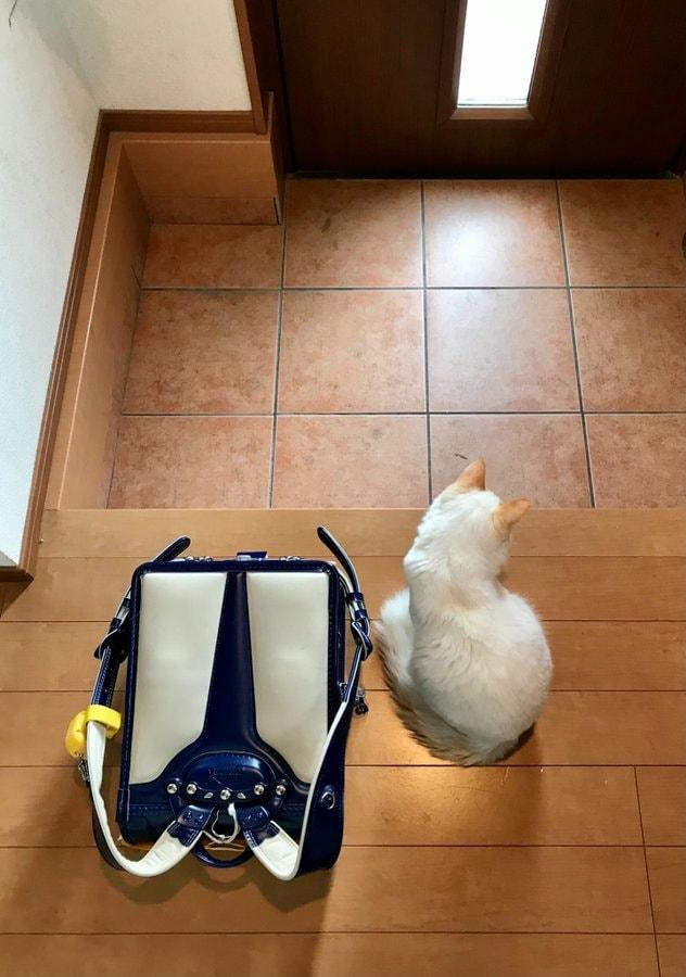 ▲白貓:回家的摸摸呢?(圖/Twitter@omochi_nam01)