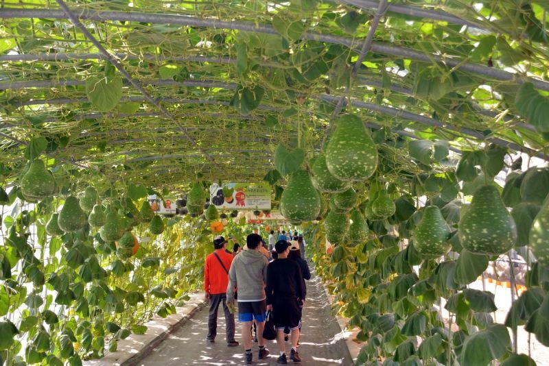 ▲瓜果長廊是今年熱博24個主題的打卡亮點,讓前來的全國民眾感受體驗豐富農事活動。(圖/屏東縣政府提供,