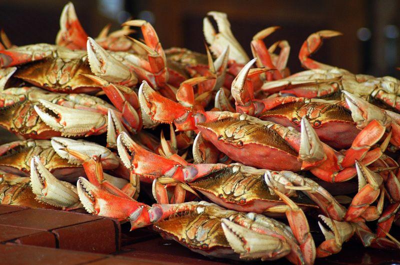 ▲螃蟹。(示意圖/翻攝自Pixabay)