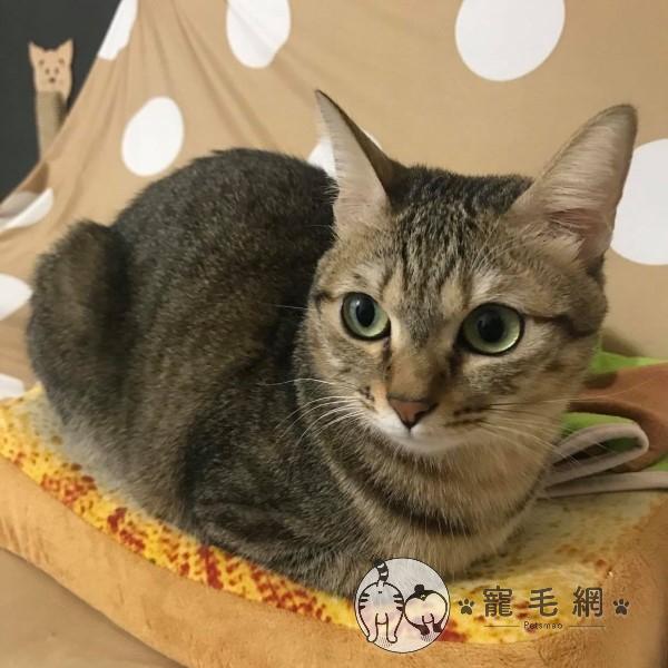 ▲「啾咪」是一隻很會表達意見的可愛虎斑貓(圖/網友Yi