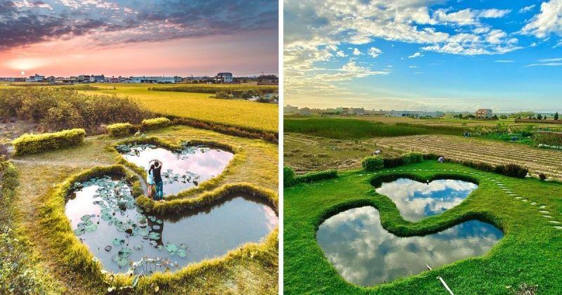 ▲彰化大村鄉的平和社區大片綠油油稻田中,有一處極具巧思的景點,那就是「雙心池塘」了!(圖/@forever94020 (左) 和 @hit_tsai (右)/Instagram提供)