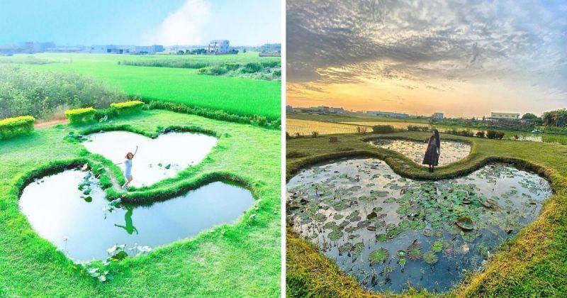 ▲雙心池塘一年四季也展現出不同的風貌,由於池中栽種了許多蓮花,每到蓮花盛開之際,雙心池塘則搖身一變,成為立體的3D雙心。(圖/@wendy612592