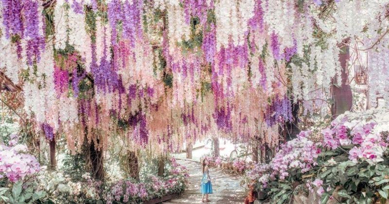 ▲農場中最吸引人的角落便是夢幻的紫藤花瀑布。大量粉紫色的花由上垂降下,猶如瀑布般,十分壯觀浪漫!(圖/@lilianwang_tw/Instagram提供)