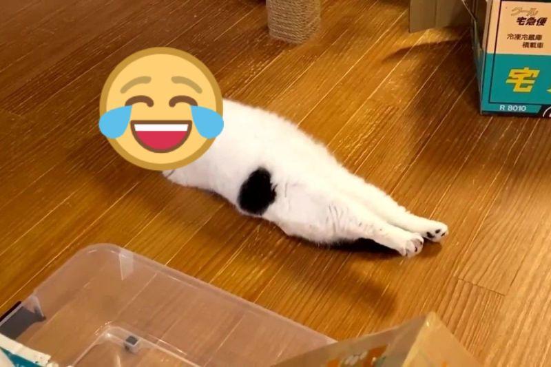 貓咪「謎之躲迷藏」雙腳伸直放空 網笑:在看VR嗎?