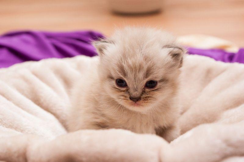 為何近年超多女生愛養貓?全場點出「3原因」:還用問嗎