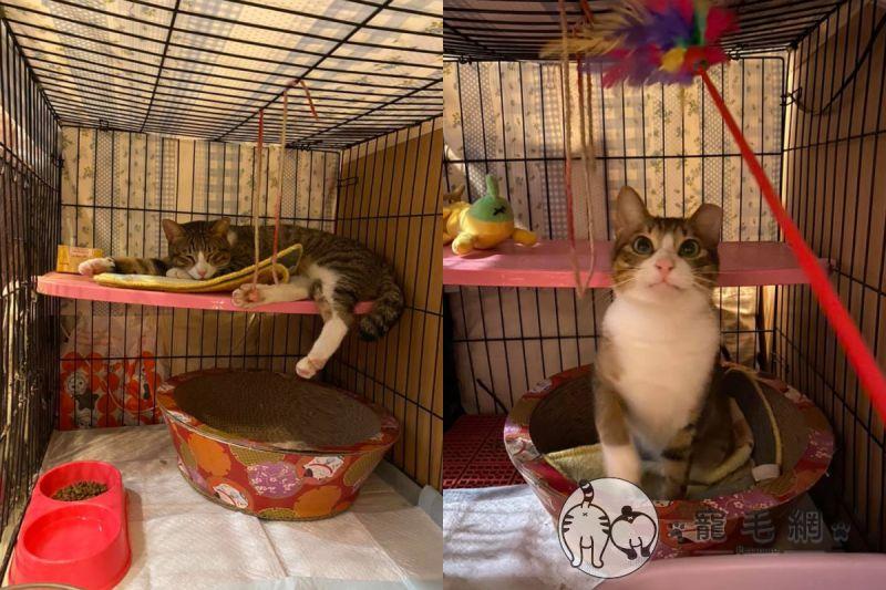 ▲收編第一天,小咪在新家感到相當「速西」(圖/網友Mina