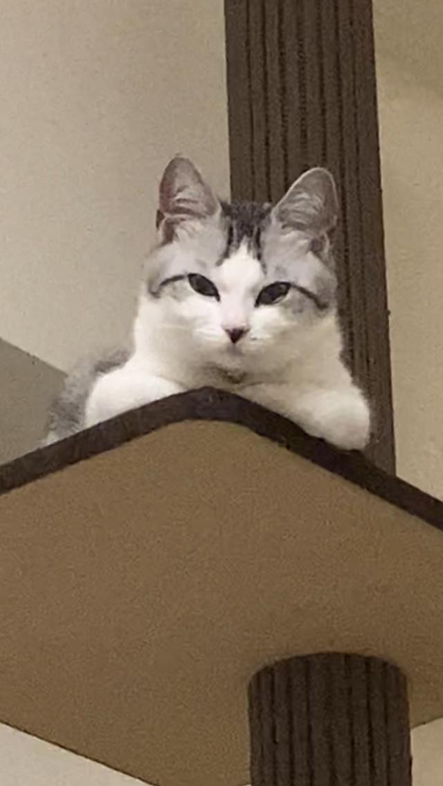 ▲下一張照片,只見貓皇投以主人質疑眼神,好似在提出無聲的抗議,質問主人「是你幹的好事?對吧?」
