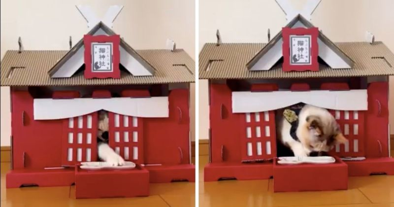 ▲女網友示範將「供品」放置在神社的門口,不久後,馬上有一隻白肉墊從大門口伸出,收下供品。(圖/擷取自@maihimemoco/Twitter)