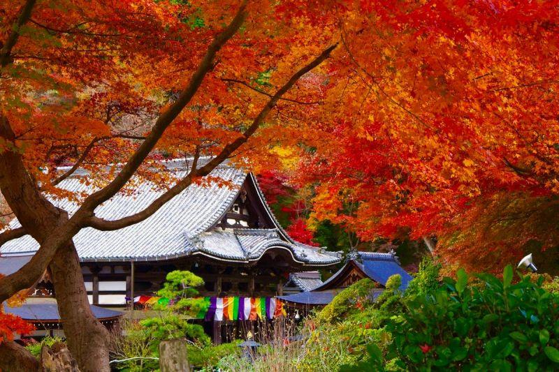 ▲岡寺建於西元633年,是日本最早的除厄開運寺。(圖/資料照片)
