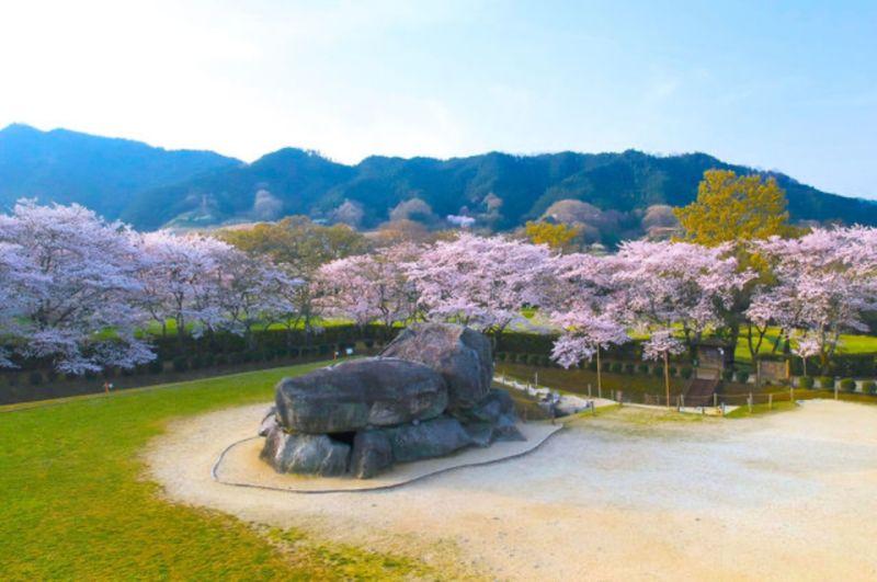 ▲春天時盛開的櫻花圍繞著巨石,這裡也是日本知名的賞櫻名所。(圖/資料照片)