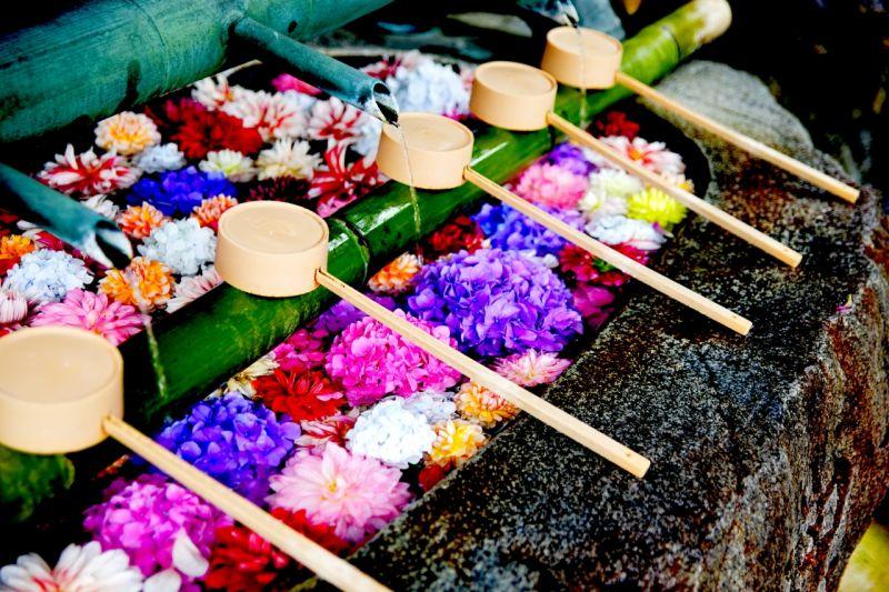 ▲在4月中至5月初左右此處有3000株石楠花盛開,同時會舉辦石楠花祭典。另外,寺廟裡的水池、手水舍、本堂前鉢,會以繽紛的「華之池」迎接訪客,另外還有天竺牡丹、蝴蝶花、皐月杜鵑等花卉點綴寺廟的各個角落。(圖/資料照片)