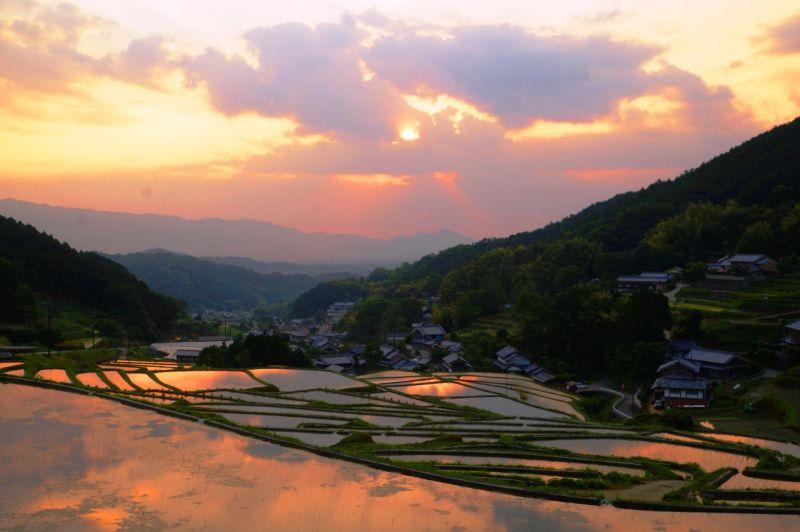 ▲細川梯田有著絕佳的地理位置,夏季水田倒映出的火燒夕陽,吸引不少旅客前往目睹。(圖/業者提供)