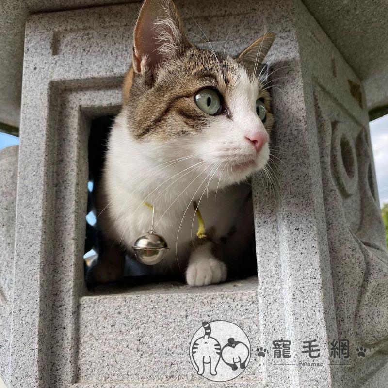 ▲日本推主家設有石燈籠景觀(圖/Twitter@neko_oden123授權)