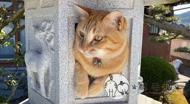▲小小空間剛好能容納一隻貓(圖/Twitter@neko_oden123授權)