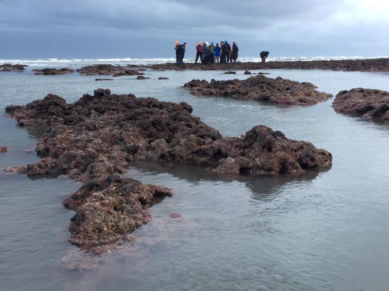 名家論壇》海人/護藻礁,別藉環保之名行政治動員