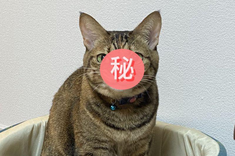 虎斑貓看著<b>主人</b>「面露嘲諷」嘴歪歪 網笑:計畫通!
