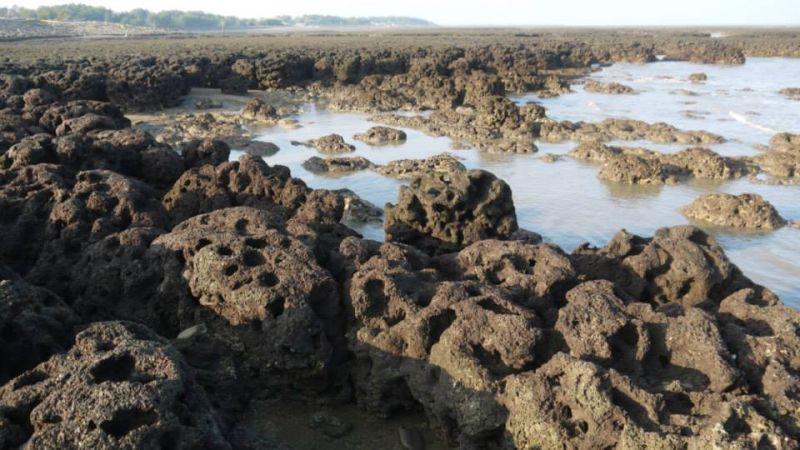 環團稱進大潭藻礁遭拒 中油卻對釣客放行