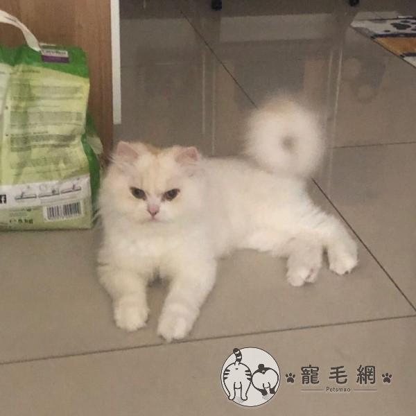 ▲個性外向的「Nico」是Nia的麻吉,兩隻貓每天玩在一起(圖/IG@nemocoya._.cat授權提供)