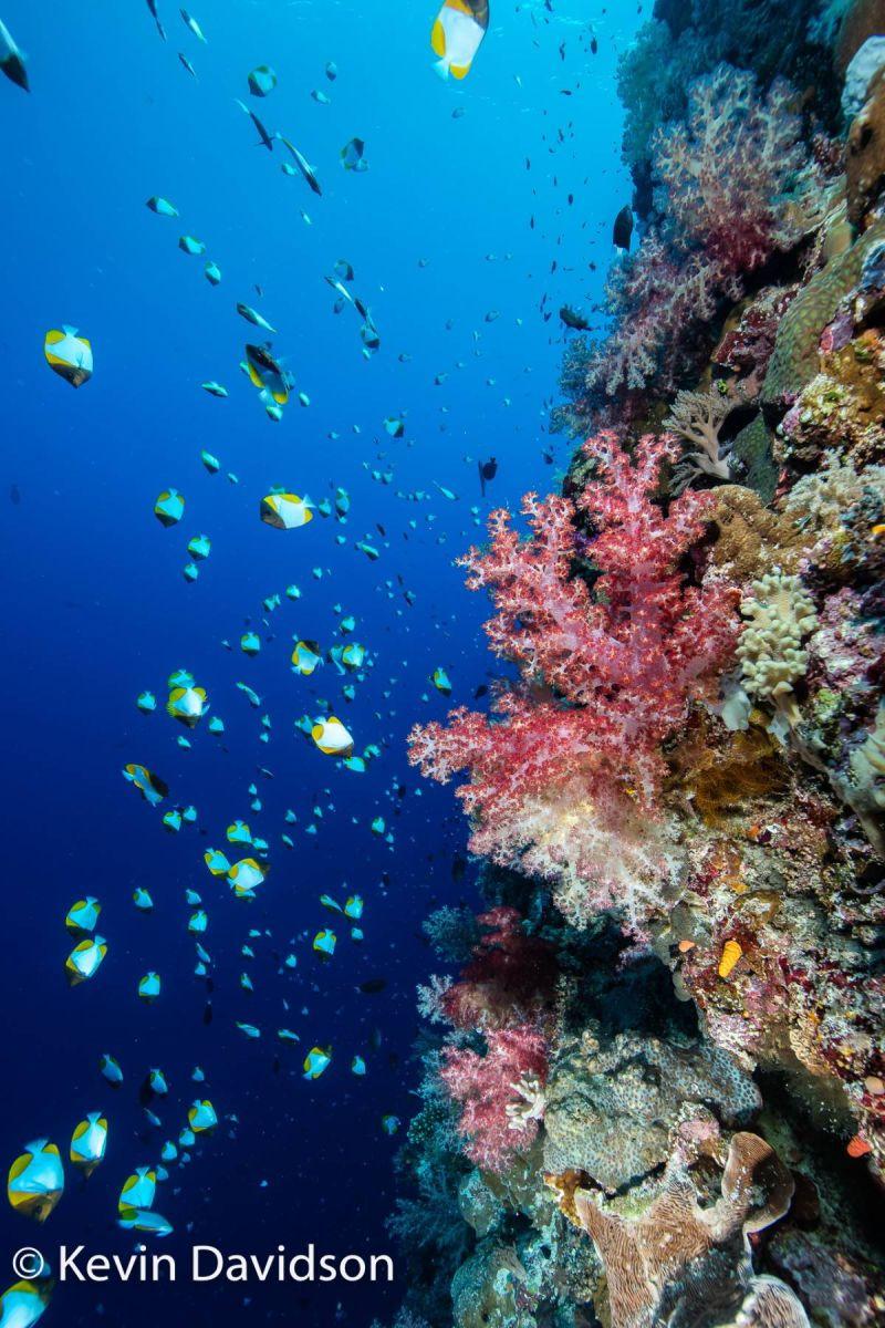 ▲帛琉擁有牛奶湖、藍洞、大斷層等天然景觀,是著名的海島度假與潛水勝地。(圖/帛琉觀光局)