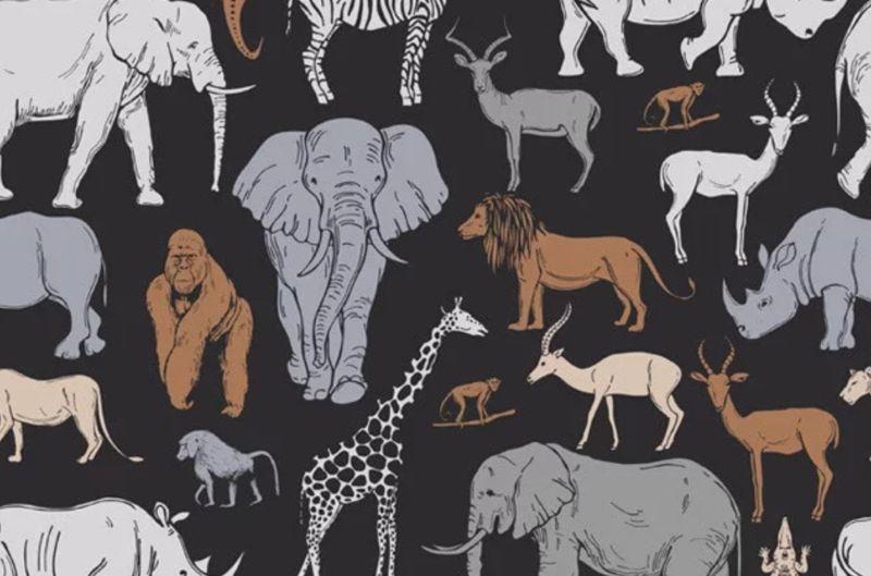 ▲第一眼先看到哪個動物?測你嚮往哪種「婚姻生活」。(圖/翻攝自《香港01》)