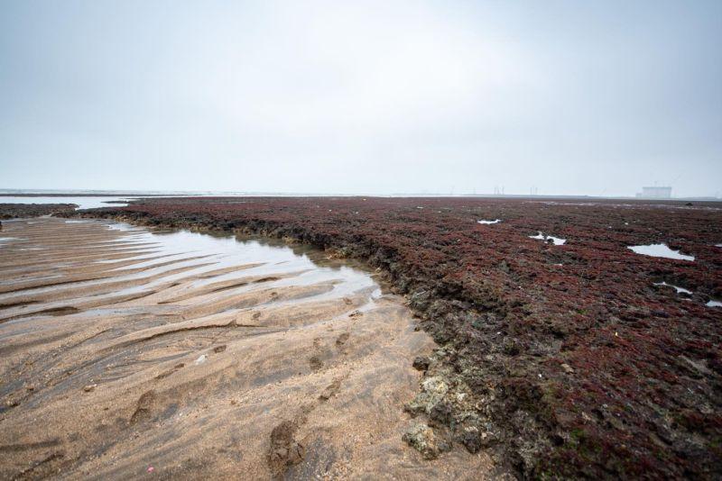名家論壇》網路溫度計/護藻礁怎麼吹成「核四重啟」?