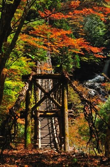 ▲奧祖谷二重藤蔓橋,被列為日本三大奇橋之一。(圖/公關照片)