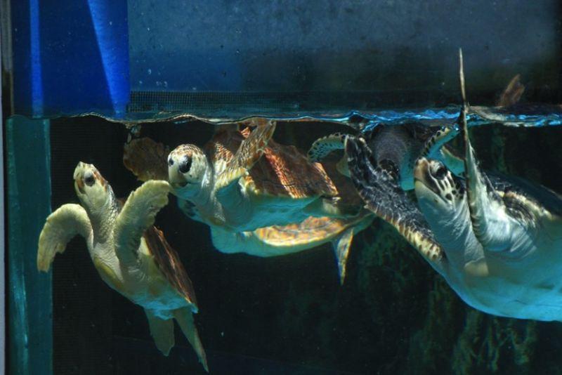 ▲有0-3歲的可愛「小烏龜水槽」、珍稀海龜暢遊的「漂浮海龜館」、週末還可以餵食戶外「大龜泳池」,讓遊客近距離接觸可愛的海龜們。(圖/公關照片)