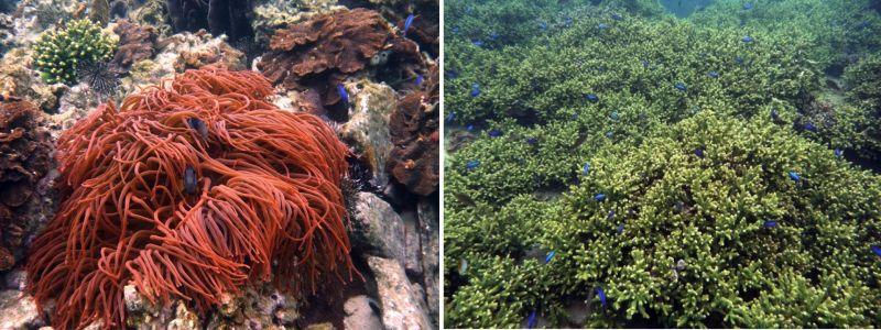 ▲海中觀光船相當有趣,可從船內欣賞海中風景,觀賞千年珊瑚色彩繽紛的熱帶魚、海中生物等。