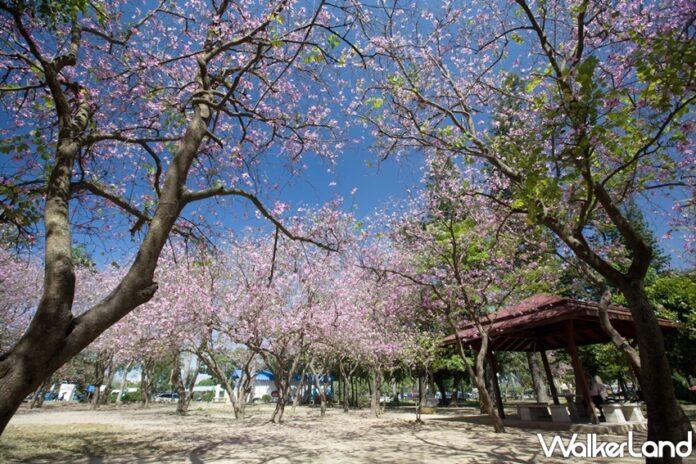 台南擁有眾多賞花熱點