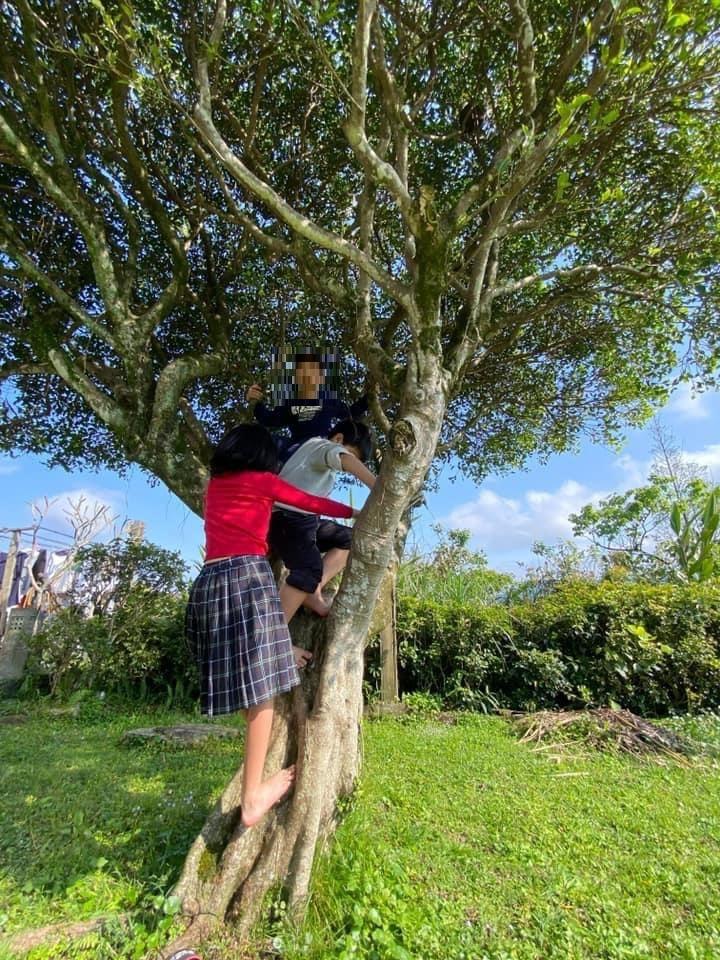 ▲吳淡如女兒(左一)爬樹被酸草包。(圖/翻攝吳淡如臉書)