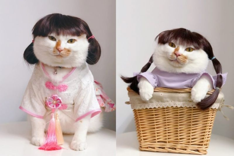 橘白貓化身「甜美系少女」 其實牠是重量級男兒身!
