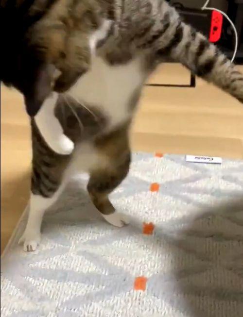 ▲貓貓:怎麼突然不見了!(一個旋風式轉身)(圖/Twitter