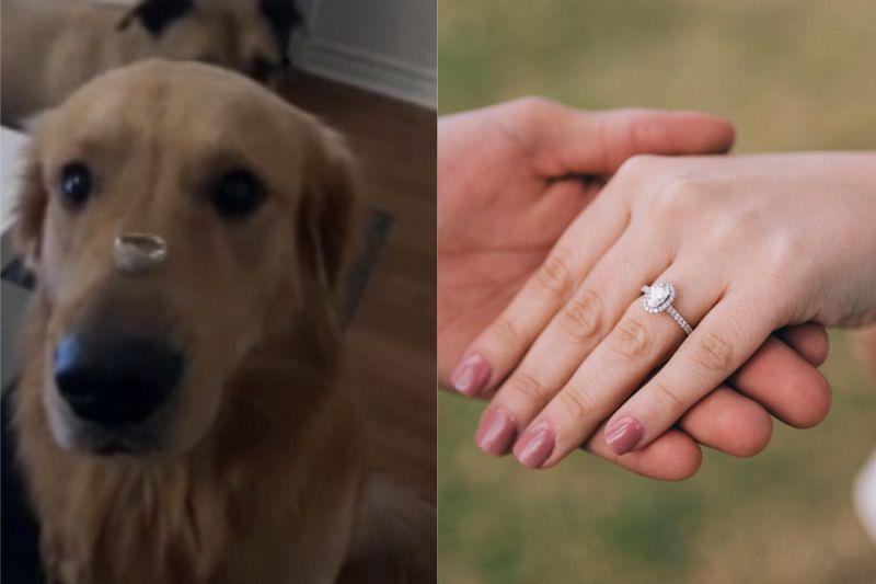 想拍照炫耀訂婚戒指!她竟放在「狗鼻上」 下秒一響GG了