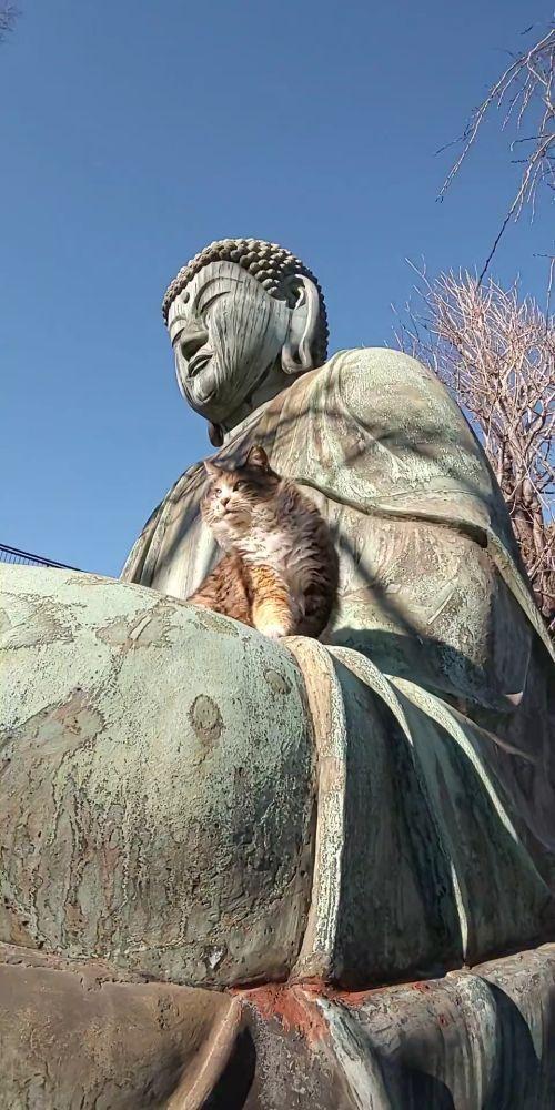 ▲貓:我跟佛祖也是好麻吉!(圖/Twitter