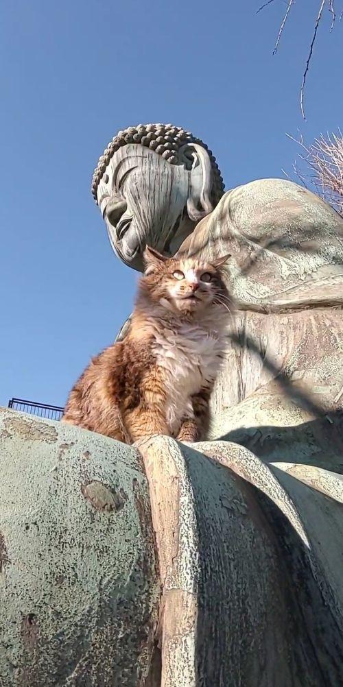 ▲貓:拜祂時也進德進貢罐罐給我喔!(圖/Twitter