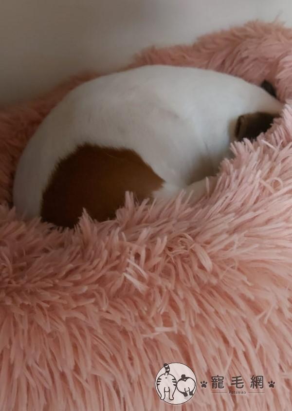 ▲狗狗:軟軟的真舒服!(圖/網友Li