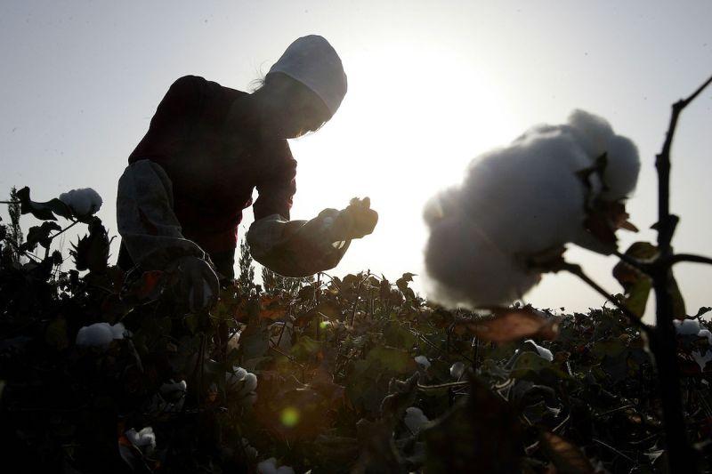 ▲新疆棉花風暴引發東西方有關強迫勞動與否的論戰。資料照。(圖/美聯社/達志影像)