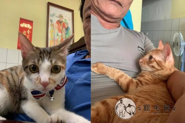 ▲兩隻貓咪非常會撒嬌,爸爸經常傳照片炫耀給Norah看(圖/網友Norah