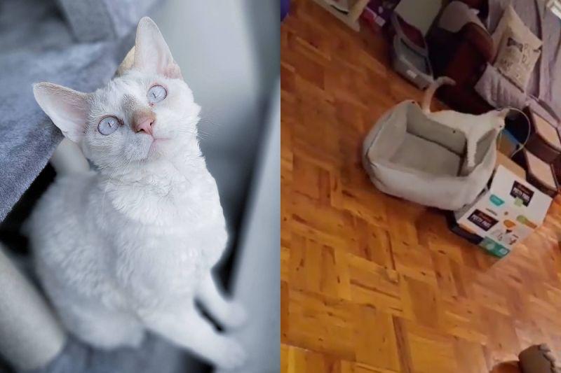 貓咪突發奇想,自己搬窩想製做最強床鋪!(圖/Instagram @dev0n_trio)