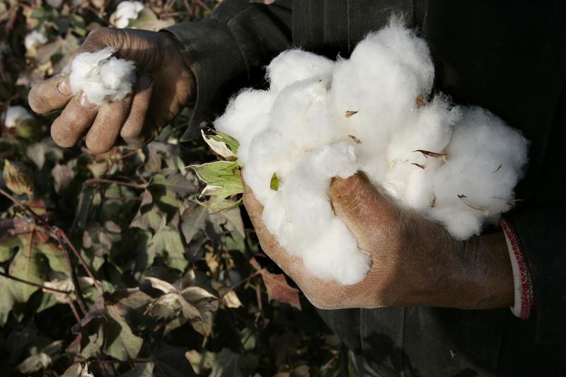 抵制效應持續擴大!中國棉協會再嗆:新疆棉花不缺訂單