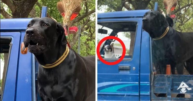 ▲大隻的台灣犬雖然非常吸睛,但網友對於駕駛座的「司機」更感興趣。(圖/網友 Jiang Yi-yun提供)