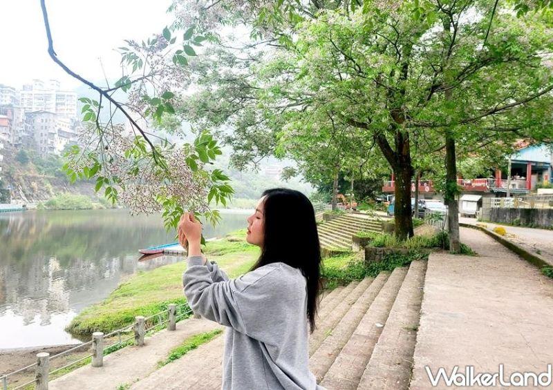 ▲每到三月底、四月初就能看見浪漫的紫花盛開。(圖/Taipei