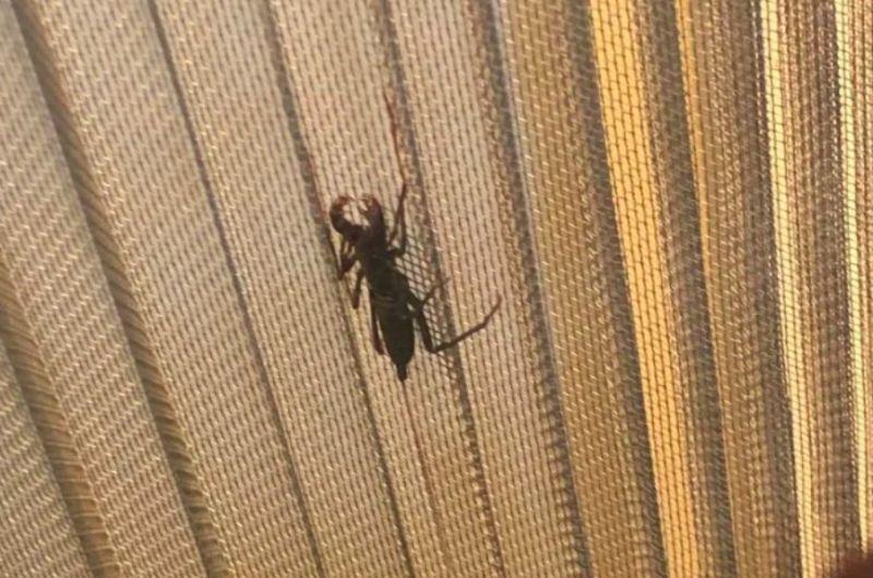 ▲網友分享自己在家中紗窗發現一隻奇怪的蟲子,結果就用滾輪把他殺死了。(圖/Dcard)